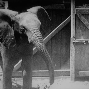 If Not For a Baby Elephant: How a Wildlife Charity, The Born Free Foundation, Was Born