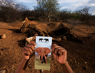 Elephant Watch Camp, Samburu National Reserve, conservation, action, conservation in action, Big Five, Big Five animals, wild safaris, wildlife safaris, Elephant Watch Portfolio, Nairobi, Kenya