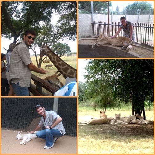 Afrikai szafari és kaszinó: Lion Park Johannesburg