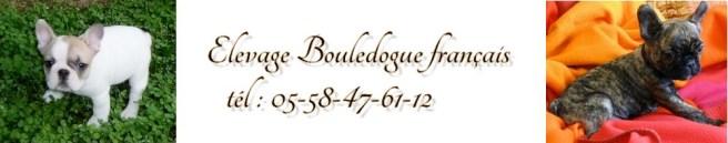 Eleveur bouledogue français
