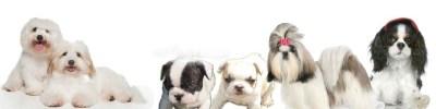 elevage chiens et et chiot