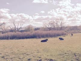 Beautiful day at Schmitt Angus Ranch!