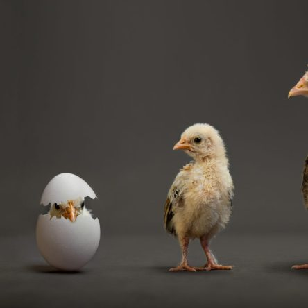 marketing strategy - chicken or egg?