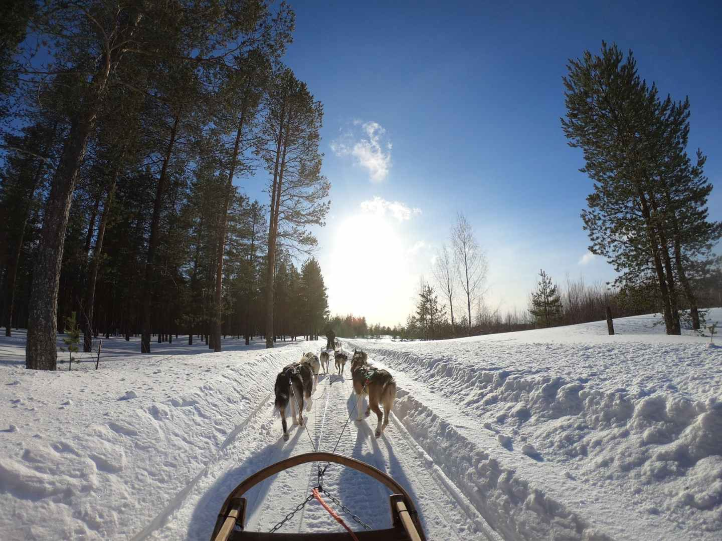 Sled Dogs Deliver Supplies