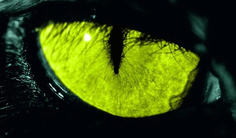 Netflix da luz verde a serie de Stephen King con los creadores de Stranger Things al mando