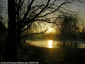Teich im Morgengrauen
