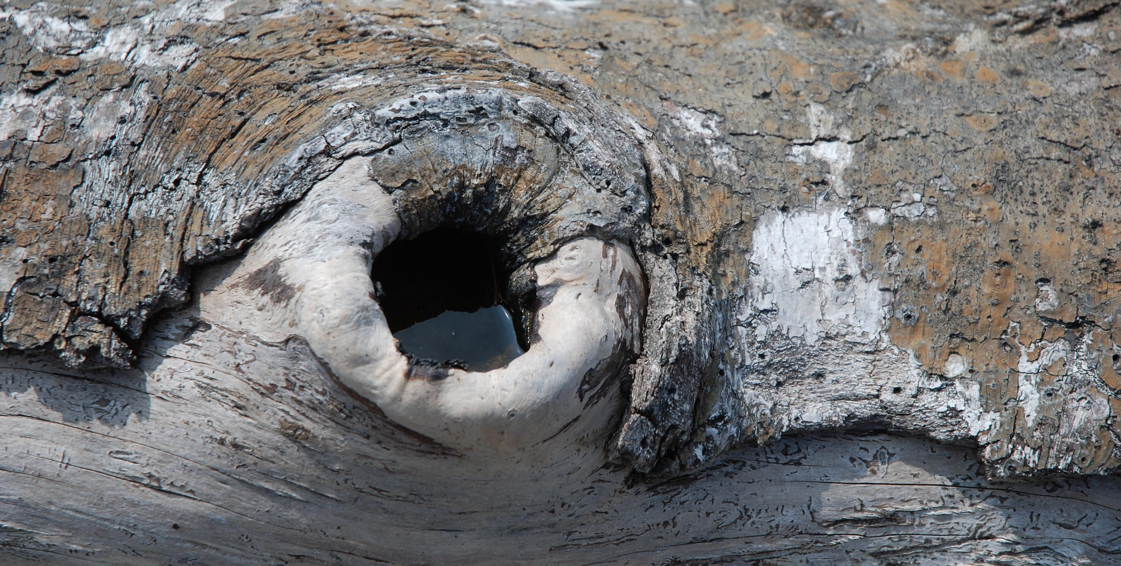 treehole