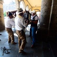 Caballo se desboca con calandria frente al Ayuntamiento de Guadalajara