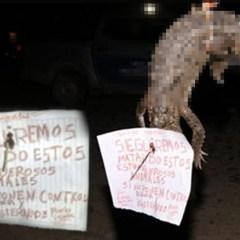 Asesinan a cocodrilo y le clavan mensaje en la frente