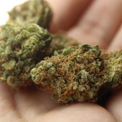 Posible despenalización de la mariguana antes de diciembre