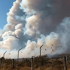 Veda de 20 años protege zonas afectadas por incendio en La Primavera