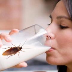 ¡Todo mal! Denuncia Lilly Téllez compra de leche con cucarachas del DIF de CDMX y Veracruz a empresa fantasma.