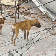 México es tercer lugar en maltrato animal