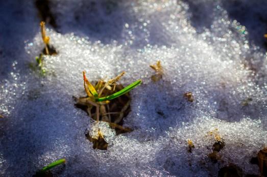 Parque helado, Madrid, enero de 2015. Fotógrafo: Daniel Ramos.