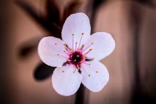 Flores. Fotógrafo: Daniel Ramos.