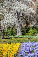 Real Jardín Botánico de Madrid, marzo de 2015. Fotógrafo: Daniel Ramos.