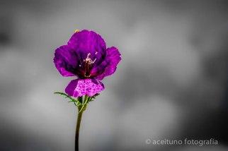 Flores silvestres, Ciempozuelos. Primavera de 2015. Fotógrafo: Daniel Ramos.