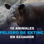 10 Animales en peligro de extinción en Ecuador