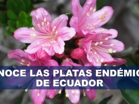 CONOCE LAS PLATAS ENDÉMICAS DE ECUADOR