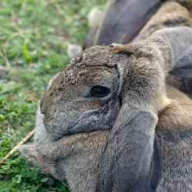 800-kanin