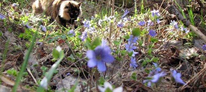 СовершенноЛетняя весна! :)