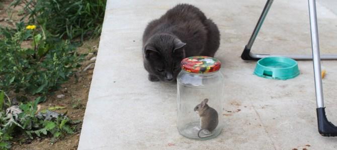 Таки аборигены съели Кука. Или как в доме заводятся мыши )))