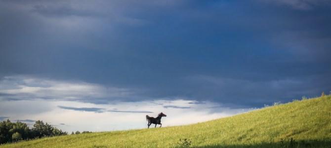 Поскакушки лошадушки. Тут просто фотки весёлой Йоль )