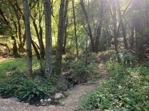 Bear Creek Redwoods Open Space Reserve – Alma Trail and Redwood Springs Trail Loop(1)
