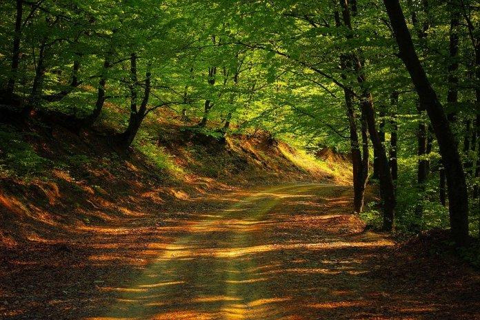 Sendero bosque natural en primavera