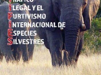 El CNA colabora contra el tráfico ilegal de especies silvestres