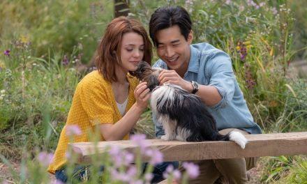 'Tu mejor amigo: Un nuevo viaje': Las vidas de un perro