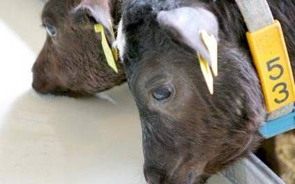 """La enfermedad de """"las vacas locas"""" todavía puede contagiar a humanos"""