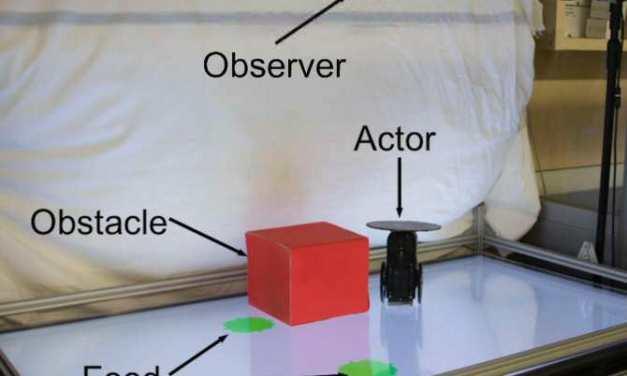 ¿Es capaz un robot de intuir lo que hará otro robot?