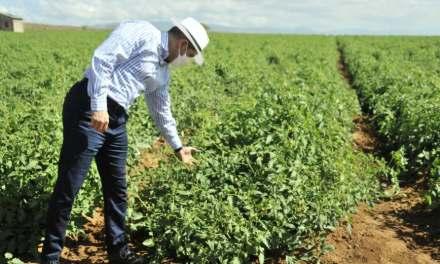 En últimos 6 meses el Gobierno ha invertido RD$767 MM en producción agropecuaria en SJ