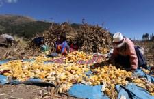 El agro y la población rural, los más perjudicados en la distribución del presupuesto para el año 2017