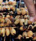 Rechazo a comer insectos