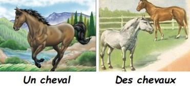 cheval1