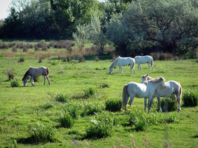parc-naturel-regional-camargue-2150_w1000