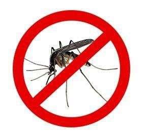 Prevenir y Tratar las Picaduras de Insectos Sin Sustancias Químicas Peligrosas