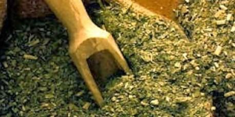 Propiedades de la yerba mate - Ilex paraguariensis