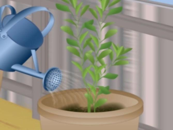 Grow Fruit in Pots Step 6.jpg
