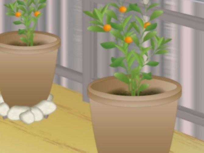 Grow Fruit in Pots Step 9.jpg