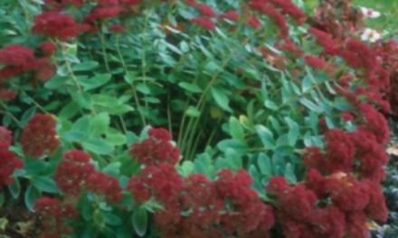 10 tips para la división de plantas perennes