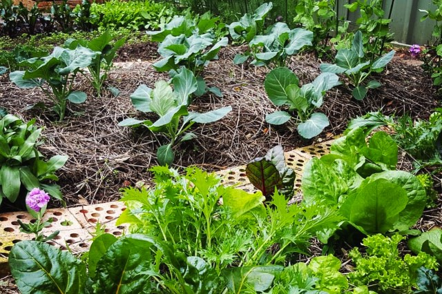 garden beds (2)