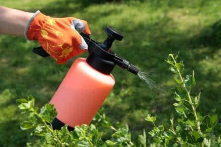 Recetas de Insecticidas orgánicos caseros y ecológicos para tus plantas