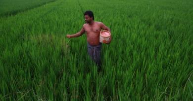 , Agricultores Indios logran récord mundial de cosechas sin usar transgénicos, una auténtica revolución verde
