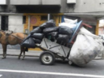 Israel: el primer país en prohibir la tracción animal