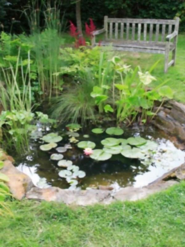 Como Construir Un Estanque En Tu Jardin El Horticultor - Jardin-con-estanque