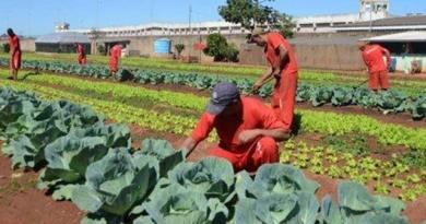 , Huerta en una prisión produce 400 cajas de alimentos por mes