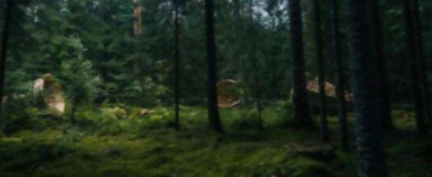 megafono-escuchar-bosque-10